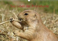Das Leben der Präriehunde (Wandkalender 2019 DIN A3 quer)