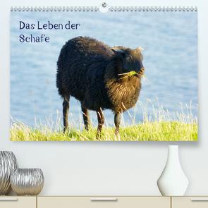 Das Leben der Schafe (Premium, hochwertiger DIN A2 Wandkalender 2021, Kunstdruck in Hochglanz) von kattobello