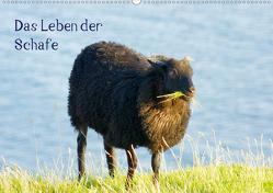 Das Leben der Schafe (Wandkalender 2021 DIN A2 quer) von kattobello