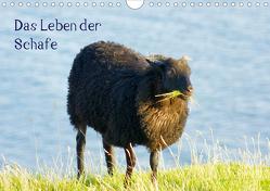 Das Leben der Schafe (Wandkalender 2021 DIN A4 quer) von kattobello