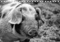 Das Leben der Schweine (Tischkalender 2018 DIN A5 quer) von Kattobello,  k.A.