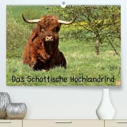 Das Schottische Hochlandrind (Premium, hochwertiger DIN A2 Wandkalender 2020, Kunstdruck in Hochglanz) von Schmutzler-Schaub,  Christine