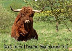 Das Schottische Hochlandrind (Wandkalender 2019 DIN A2 quer) von Schmutzler-Schaub,  Christine