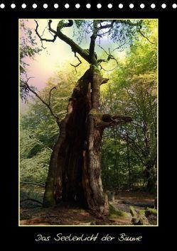 Das Seelenlicht der Bäume (Tischkalender 2018 DIN A5 hoch) von Hubner,  Katharina