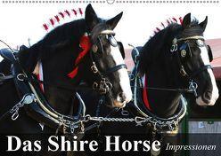 Das Shire Horse. Impressionen (Wandkalender 2019 DIN A2 quer) von Stanzer,  Elisabeth