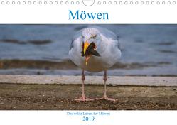 Das wilde Leben der Möwen (Wandkalender 2019 DIN A4 quer) von Wünsche,  Arne