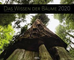 Das Wissen der Bäume 2020 von Cook,  Diane, Jenshel,  Len