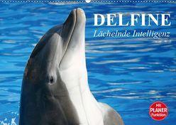 Delfine – Lächelnde Intelligenz (Wandkalender 2019 DIN A2 quer) von Stanzer,  Elisabeth