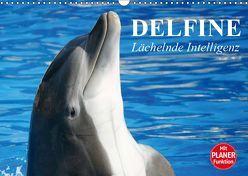 Delfine – Lächelnde Intelligenz (Wandkalender 2019 DIN A3 quer) von Stanzer,  Elisabeth