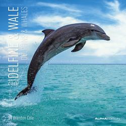 Delfine & Wale 2020 – Dolphins & Whales – Wandkalender – Broschürenkalender (30 x 60 geöffnet) – Tierkalender – Wandplaner von ALPHA EDITION, Cole,  Brandon