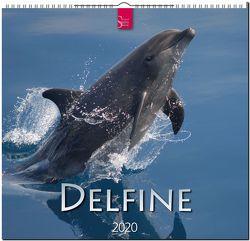 Delfine von Redaktion Verlagshaus Würzburg,  Bildagentur