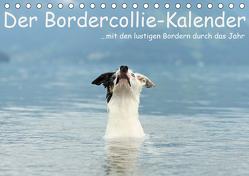 Der Bordercollie-Kalender (Tischkalender 2020 DIN A5 quer) von Köntopp,  Kathrin