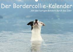 Der Bordercollie-Kalender (Wandkalender 2020 DIN A3 quer) von Köntopp,  Kathrin