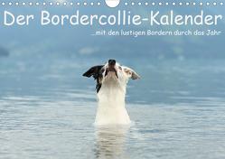 Der Bordercollie-Kalender (Wandkalender 2020 DIN A4 quer) von Köntopp,  Kathrin