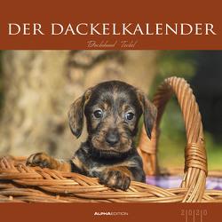 Der Dackelkalender 2020 – Bildkalender (33 x 33) – Tierkalender – Hunde – Dogs – Wandkalender von ALPHA EDITION