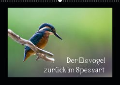 Der Eisvogel zurück im Spessart (Wandkalender 2019 DIN A2 quer) von Reibert,  Björn