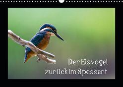 Der Eisvogel zurück im Spessart (Wandkalender 2019 DIN A3 quer) von Reibert,  Björn
