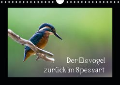 Der Eisvogel zurück im Spessart (Wandkalender 2019 DIN A4 quer) von Reibert,  Björn