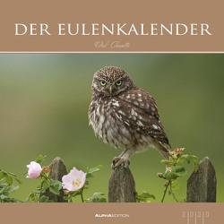 Der Eulenkalender 2020 – Eulen – Owls – Bildkalender (33 x 33) – Tierkalender – Wandkalender von ALPHA EDITION
