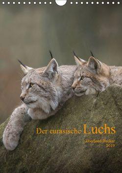 Der eurasische Luchs (Wandkalender 2019 DIN A4 hoch) von Becker,  Eberhard