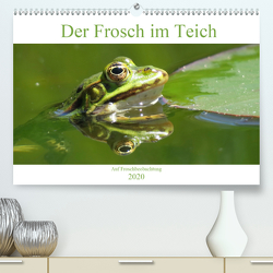 Der Frosch im Teich – auf Froschbeobachtung (Premium, hochwertiger DIN A2 Wandkalender 2020, Kunstdruck in Hochglanz) von Schimmack,  Claudia