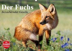 Der Fuchs. Bezaubernder Geselle (Wandkalender 2019 DIN A2 quer) von Stanzer,  Elisabeth