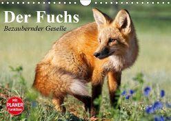 Der Fuchs. Bezaubernder Geselle (Wandkalender 2019 DIN A4 quer) von Stanzer,  Elisabeth