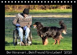 Der Hovawart… Dein Freund fürs Leben ! (Tischkalender 2020 DIN A5 quer) von Siebert,  Jens