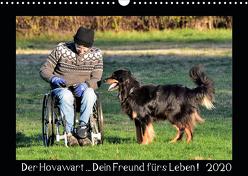 Der Hovawart… Dein Freund fürs Leben ! (Wandkalender 2020 DIN A3 quer) von Siebert,  Jens