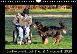 Der Hovawart… Dein Freund fürs Leben ! (Wandkalender 2020 DIN A4 quer) von Siebert,  Jens
