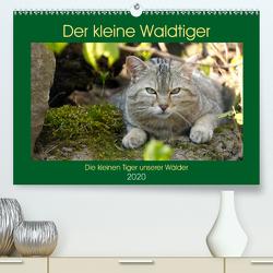 Der kleine Waldtiger (Premium, hochwertiger DIN A2 Wandkalender 2020, Kunstdruck in Hochglanz) von Brack,  Roland