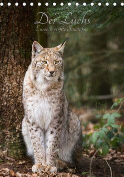 Der Luchs – Europas größte Samtpfote (Tischkalender 2019 DIN A5 hoch) von the Snow Leopard,  Cloudtail