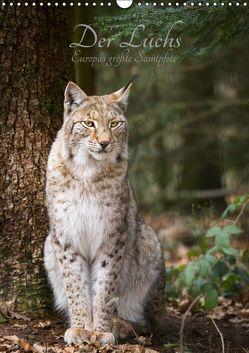 Der Luchs – Europas größte Samtpfote (Wandkalender 2019 DIN A3 hoch) von the Snow Leopard,  Cloudtail