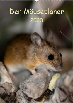 Der Mäuseplaner (Wandkalender 2020 DIN A2 hoch) von Photography by Nicole Köstler,  Passion