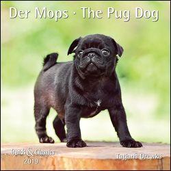 Der Mops The Pug Dog 2019 – Broschürenkalender – Wandkalender – mit herausnehmbarem Poster – Format 30 x 30 cm von Drewka,  Tatjana, DUMONT Kalenderverlag