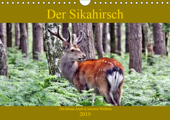 Der Sikahirsch – Der kleine Asiat in unseren Wäldern (Wandkalender 2019 DIN A4 quer) von Klatt,  Arno