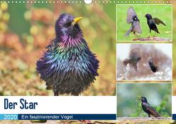 Der Star (Wandkalender 2020 DIN A3 quer) von Klapp,  Lutz