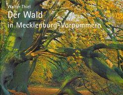 Der Wald in Mecklenburg-Vorpommern von Backhaus,  Till, Thiel,  Walter