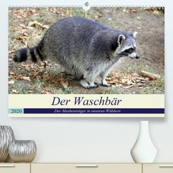 Der Waschbär – Der Maskenträger in unseren Wäldern (Premium, hochwertiger DIN A2 Wandkalender 2020, Kunstdruck in Hochglanz) von Klatt,  Arno