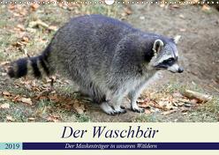 Der Waschbär – Der Maskenträger in unseren Wäldern (Wandkalender 2019 DIN A3 quer) von Klatt,  Arno