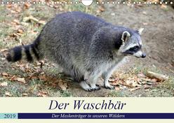 Der Waschbär – Der Maskenträger in unseren Wäldern (Wandkalender 2019 DIN A4 quer) von Klatt,  Arno