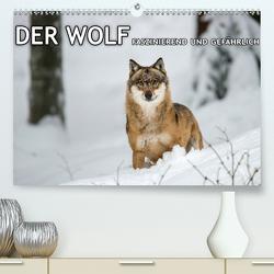DER WOLF – faszinierend und gefährlich (Premium, hochwertiger DIN A2 Wandkalender 2020, Kunstdruck in Hochglanz) von Haidl - www.chphotography.de,  Christian