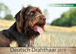 Deutsch Drahthaar 2019