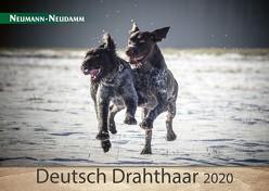 Deutsch Drahthaar 2020