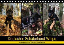 Deutscher Schäferhund-Welpe – aus der Ostdeutschen Arbeitslinie (Tischkalender 2020 DIN A5 quer) von Riedel,  Tanja