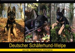 Deutscher Schäferhund-Welpe – aus der Ostdeutschen Arbeitslinie (Wandkalender 2020 DIN A2 quer) von Riedel,  Tanja