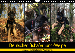 Deutscher Schäferhund-Welpe – aus der Ostdeutschen Arbeitslinie (Wandkalender 2020 DIN A4 quer) von Riedel,  Tanja