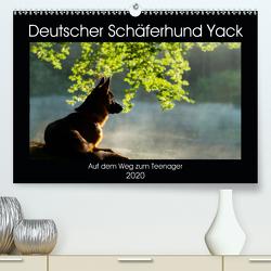 Deutscher Schäferhund Yack – Auf dem Weg zum Teenager (Premium, hochwertiger DIN A2 Wandkalender 2020, Kunstdruck in Hochglanz) von Schiller,  Petra