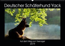 Deutscher Schäferhund Yack – Auf dem Weg zum Teenager (Wandkalender 2019 DIN A2 quer) von Schiller,  Petra