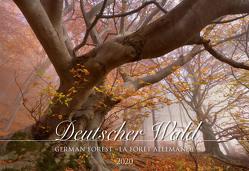 Deutscher Wald 2020 – Bildkalender quer (50 x 34) – Bäume – Wald – Landschaftskalender – Natur – Wandkalender von ALPHA EDITION
